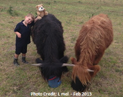 Two steers and young boy