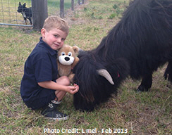 Black steer and young boy